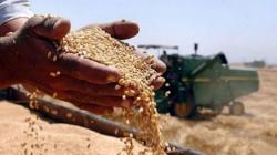 العراق يستغني عن إستيراد الحنطة في 2020