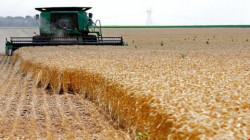 التجارة تحدد موعد إيقاف تسويق الحنطة في اربيل ونينوى