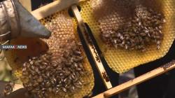 ديالى تتغلب على عقبات النزوح والأمن وتتصدر إنتاج العسل