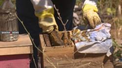 Duhok.. COVID-19 and the Turkish bombarding hit the honey production season