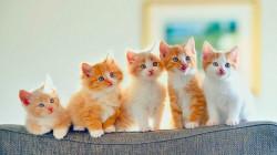 مفاجأة .. دواء للقطط قد يسهم في القضاء على كورونا