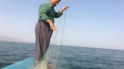 اقليم كوردستان يغطي 60% من حاجة السوق المحلية من الأسماك ويتحرك لتعليبها