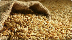 Iraq to export 700 thousand tons of barley for the first time in its history