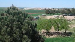 الزراعة الكوردستانية تعلن تفاصيل جديدة عن حادثة احراق الصنوبر