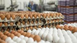 """الزراعة: التجار يتلاعبون بـ""""البيض"""" لضرب المنتج المحلي بـ""""حجر"""" الأسعار"""