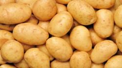 إيران تستأنف تصدير البطاطا إلى العراق
