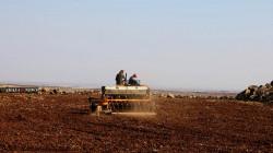 كورونا والأمطار يؤخران الموسم الزراعي في ديريك شرق سوريا