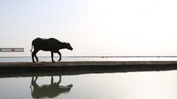 جولة مصورة في أحد أهم المشاريع السياحية المهملة في العراق