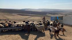 صور.. كورونا يضيق الخناق على النازحين السوريين في كوردستان