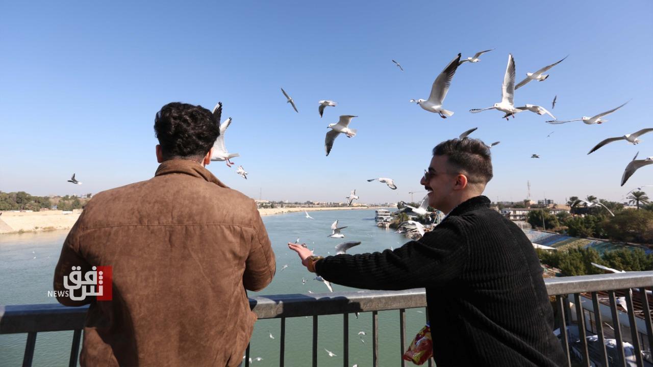 صور وفيديو.. بغداديون يلجأون إلى النوارس المعرضة لخطر الإنقراض