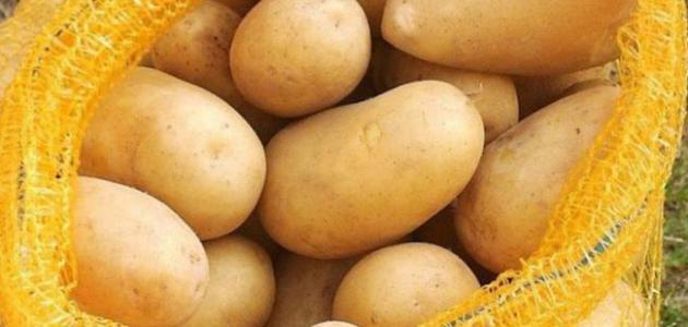العراق يصدر أكثر من 5000 طن من البطاطا الى السعودية والكويت