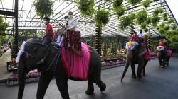 بمناسبة عيد الحب.. زفاف جماعي على ظهور الأفيال في تايلاند.. صور