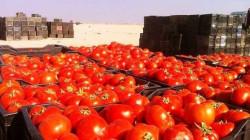 دعماً للاقتصاد الوطني.. العراق يصدر 10 آلاف طن طماطم الى السعودية