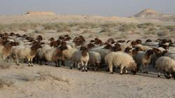 """""""رعاة داعش"""" أسلوب اختراق جديد للتنظيم الإرهابي في محافظة عراقية ساخنة"""