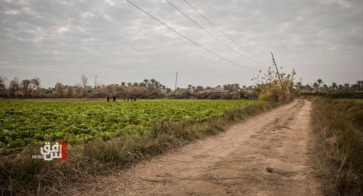 مزارعو الأنبار يخشون من تلف محاصيلهم بسبب الحظر الكلي والزراعة: غيابكم عن الأرض لن يؤثر