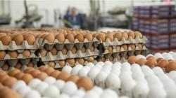 محافظة تؤكد تخطي إنتاجها مليون بيضة يوميا: زار موائد العراق سوى كوردستان