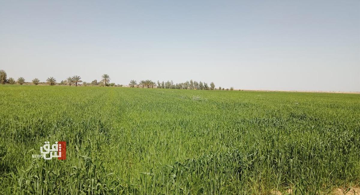 هلاك اكثر من 440 الف دونم في خانقين بسبب شح الأمطار