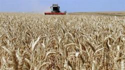 المثنى تسوق 70 ألف طن من الحنطة.. والهدف الاكتفاء الذاتي
