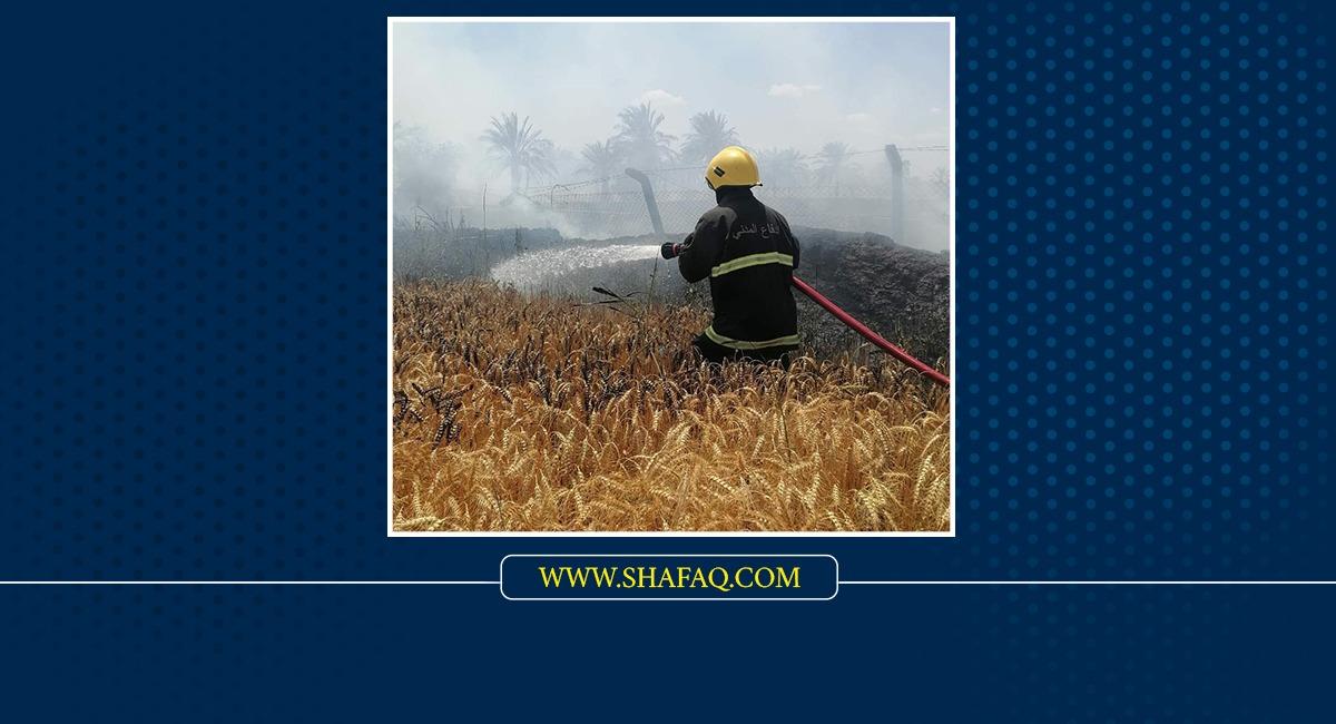 """صلاح الدين.. إنقاذ 70 دونماً بإخماد حريق ومطالبات بخطط لمواجهة """"حرب الحنطة"""""""
