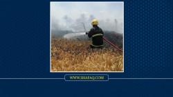 تسرب وتماس.. القصة الكاملة لحريق حقول الحنطة في الأنبار (صور)