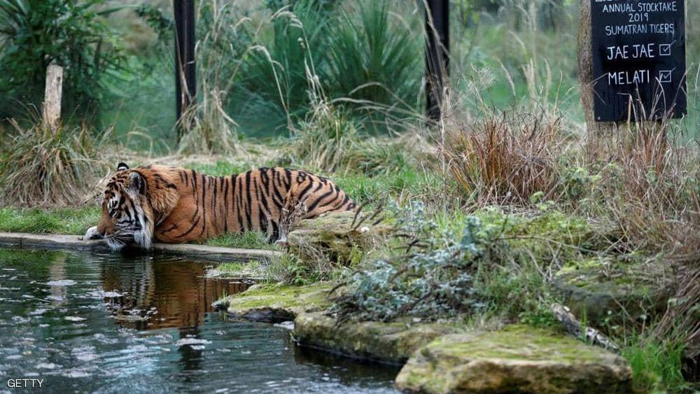 """كورونا يوجه """"ضربة مؤلمة"""" لأقدم حديقة حيوان بالعالم"""