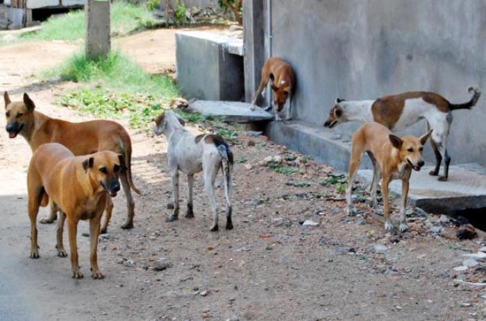 كلاب سائبة تهاجم أطفالاً في بغداد وإصابة أحدهم بجروح خطرة
