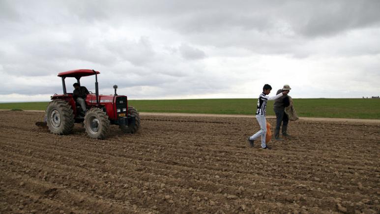 العراق يعلن انتاج 4.75 مليون طن من القمح في موسم 2019