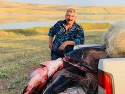 صور .. محافظة بكوردستان تضبط صيدا جائرا لأسماك عملاقة تقدر وزن الواحدة 60 كغم