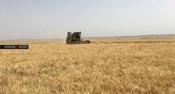 مخاوف الحرائق المفتعلة تخيم على محافظة عراقية مع بدء حصاد لموسم وفير من الحنطة