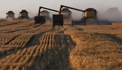 Iraq announces the need for a million tons of wheat and 250 thousand tons of rice