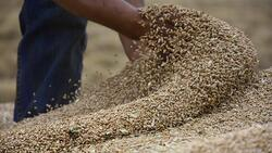 إيران تعرض على العراق شراء فائضه من القمح والشعير