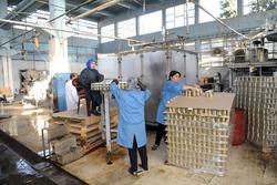 معمل في اقليم كوردستان يضاعف انتاج معجون الطماطم لـ6000 علبة معدنية بالساعة