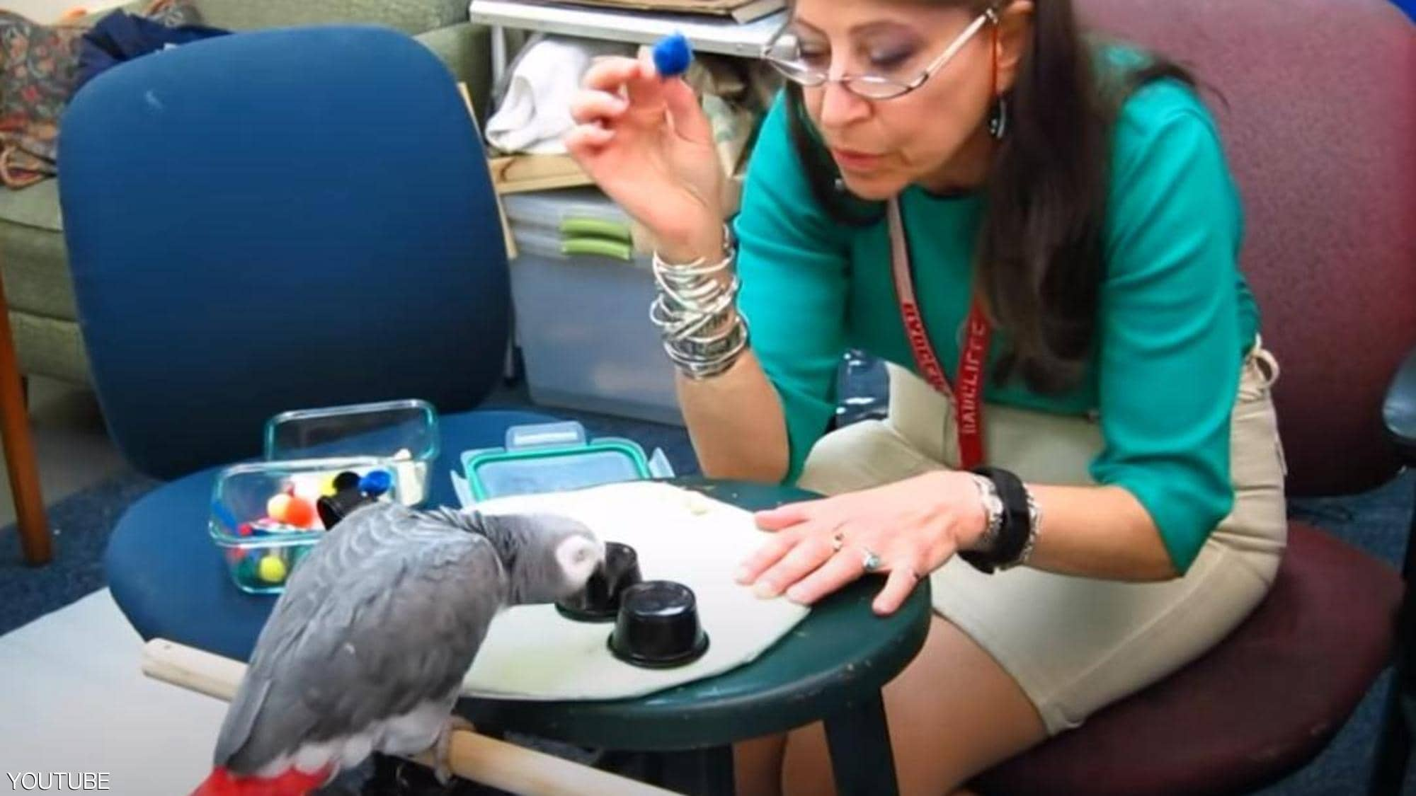 A parrot tops Harvard students
