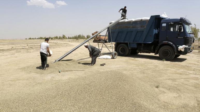 العراق: القمح والأرز يكفيان لنهاية 2019