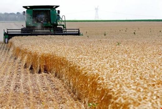 العراق يشتري قرابة أربعة ملايين طن من القمح المحلي