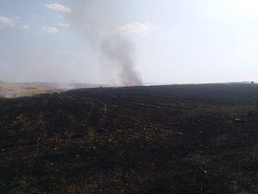 """حريق """"كبير"""" يأتي على اراضٍ زراعيةٍ في السليمانية"""