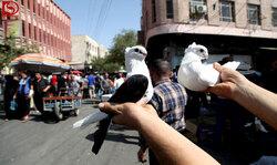 أربيل تغلق ميدان بيع الطيور بسبب كورونا