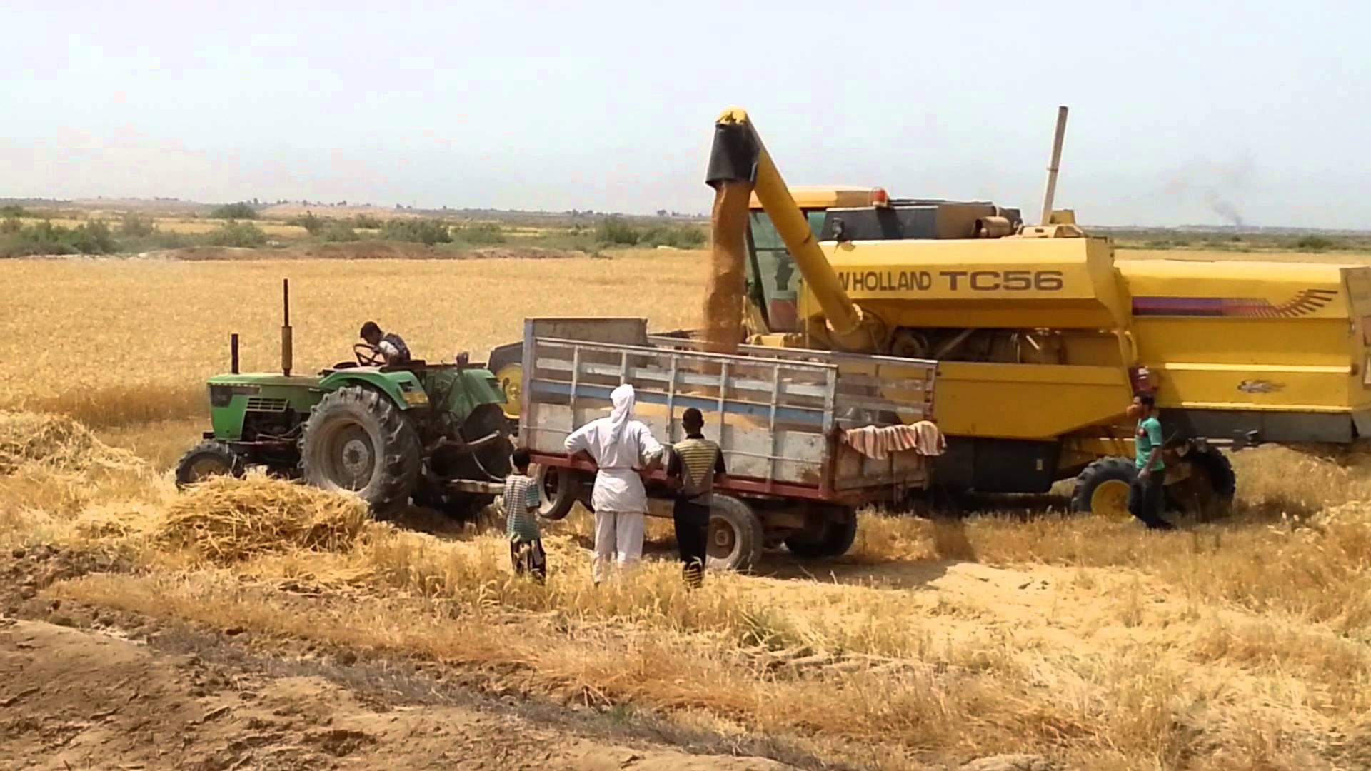 العراق يعلن تسويق أكثر من 100 الف طن من الرز المحلي
