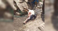 صور .. القوات الايرانية ترتكب مجزرة بحق قطيع من الاغنام والماعز في اقليم كوردستان