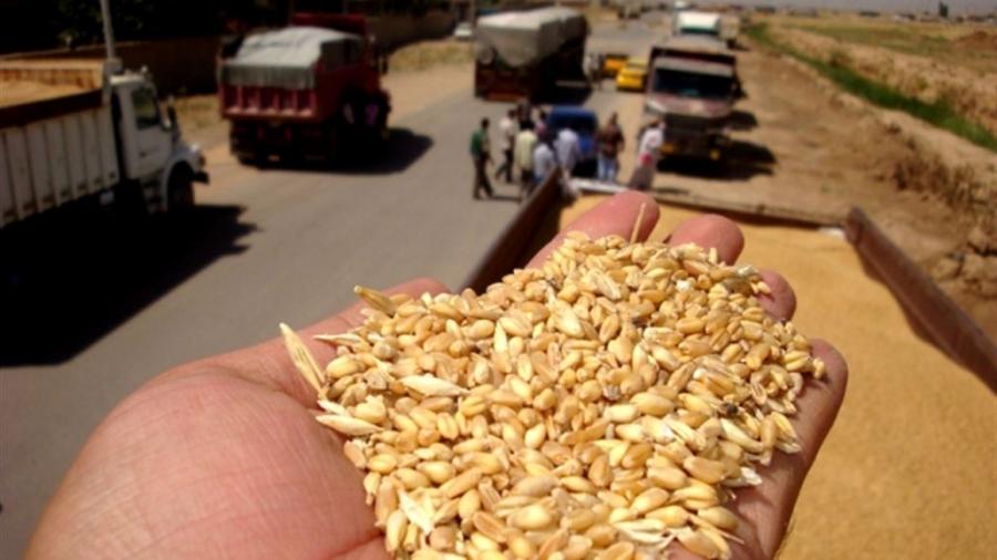 التجارة تعلن ارتفاع معدل تسويق الحنطة في الموصل لأكثر من نصف مليون طن