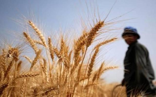 العراق.. انتهاء موسم الحنطة بتسويق أكثر من 5 ملايين طن