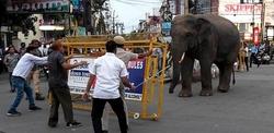 بسبب الحر الشديد.. فيل يقتل 8 أشخاص في الهند خلال بحثه عن المياه