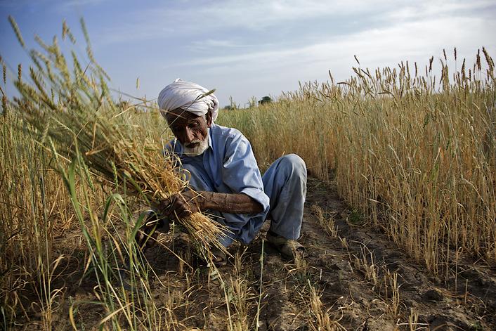 الزراعة تعلن حل مشكلة مستحقات الفلاحين بما فيها إقليم كوردستان